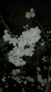 Cherry_3