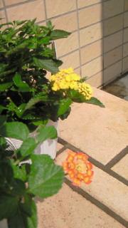 またまた咲きました(^.^)b
