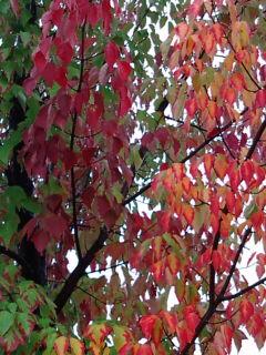 安曇野の紅葉
