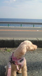 海がきれい!