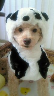 パンダに変身