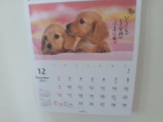 12月だぁ〜(((<br />  ・・;)