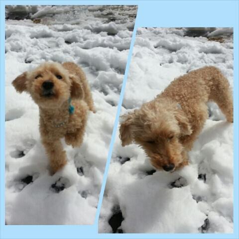 雪の次の日